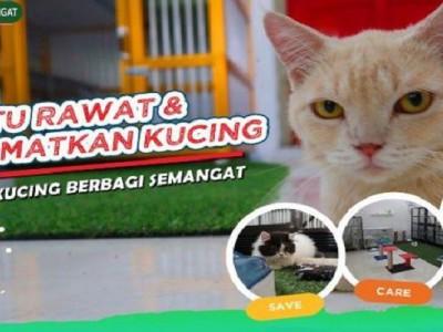 AYO BANTU! Kucing Terlantar dan Sakit